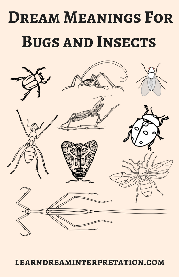 Bug and insects symbols to help with dream interpretation bug and insects symbols to help with dream interpretation buycottarizona