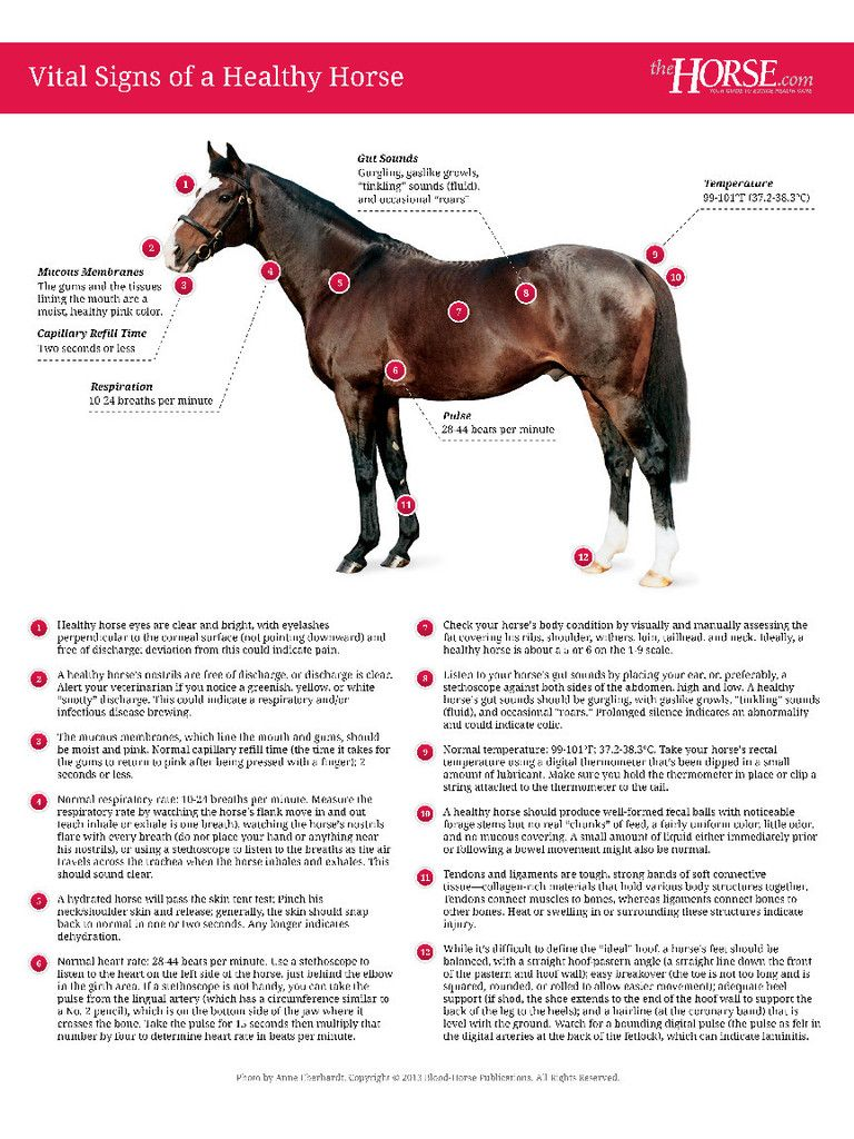Vital Signs of a Healthy Horse Poster Horses, Horse