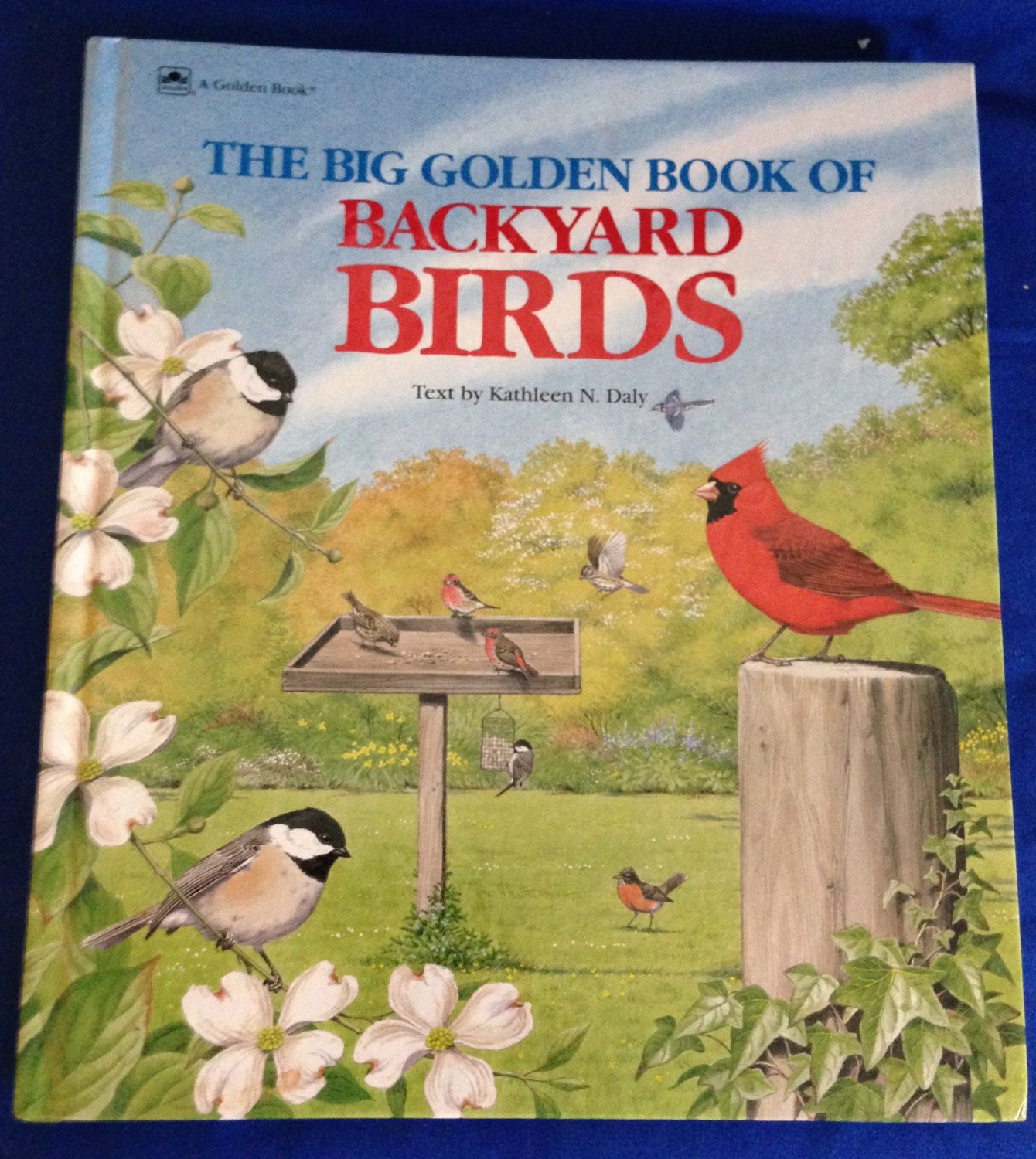 the big golden book of backyard birds by kathleen n daly a