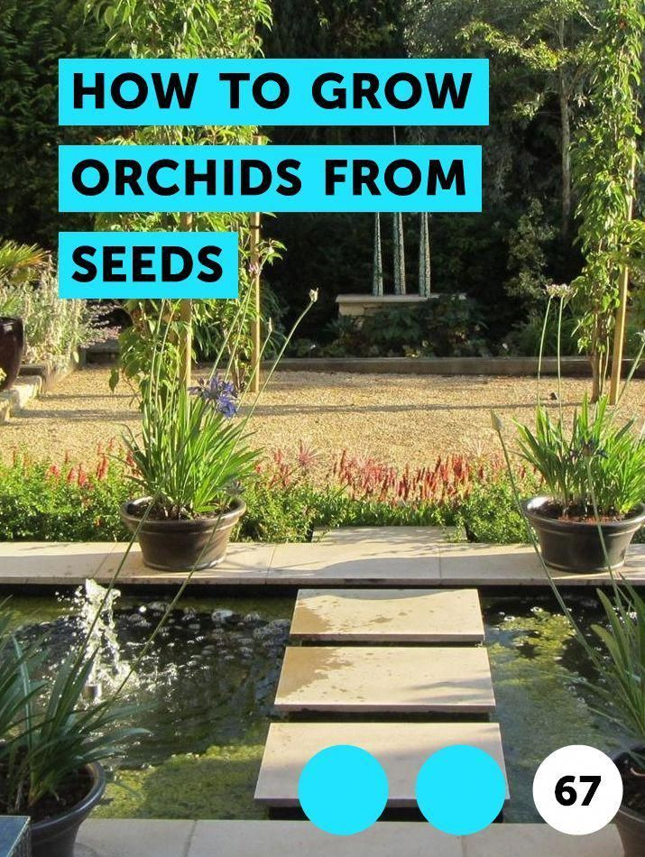 How to Grow Orchids From Seeds. Growing orchids from seed is particularly challenging since the seeds do not contain stored nutrients for successful germination and growth. To produce orchid plants from seed, the home gardener must first provide a solution containing the necessary nutrients for the orchid seed to develop. The seeds cannot grow in... #mushroomgrowing #growingorchids How to Grow Orchids From Seeds. Growing orchids from seed is particularly challenging since the seeds do not contai #growingorchids