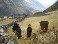 People of Manaslu harvesting Crops at Autumn