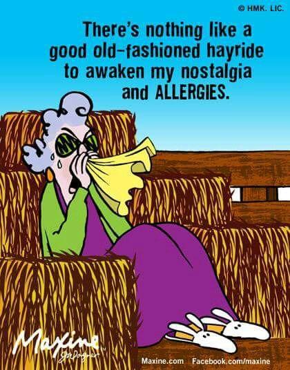 Fall Hay Ride Allergies Maxine Maxine Allergies Funny Fall Humor