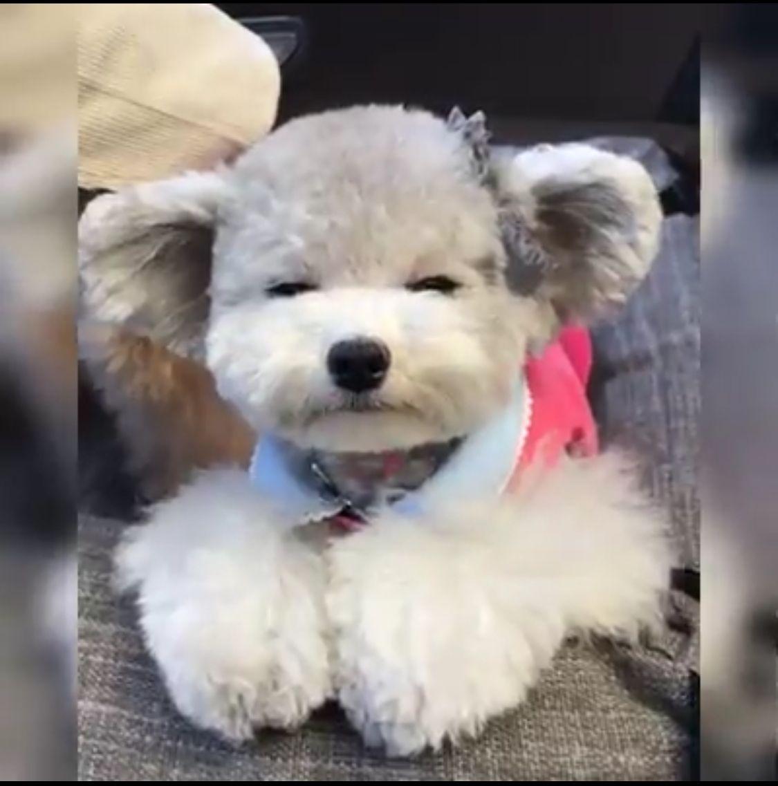 Pin by Fluff n Buff on Pet Grooming Pet grooming, Pets