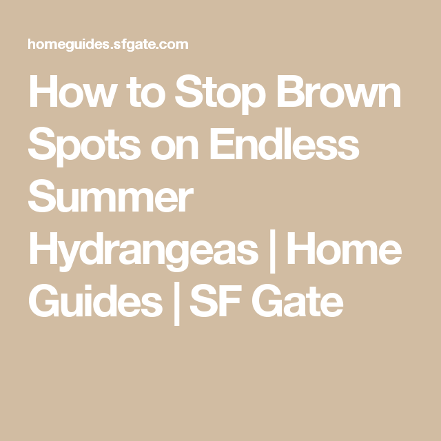 How To Stop Brown Spots On Endless Summer Hydrangeas Endless Summer Hydrangea Summer Hydrangeas Hydrangea Leaves