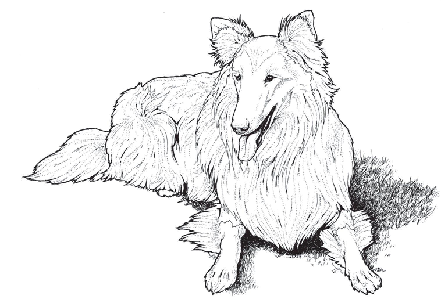 Coloring Book Dog Coloring Page Shetland Sheepdog Coloring Books