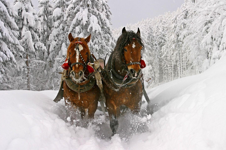Amazing Wallpaper Horse Snow - 160c8b2183d07193b4c000da6ca99ded  Collection_59871.jpg