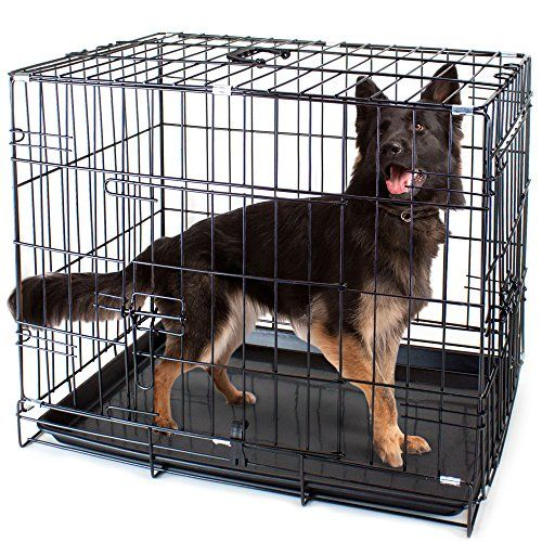 Midwest Life Stages Single Door Folding Metal Dog Crate 42 Inches