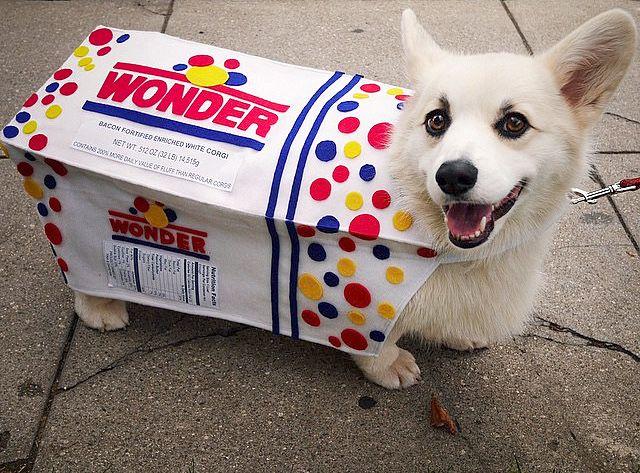 White Dog Halloween Costume | Wonder Bread Dog D Animals Pinterest Corgi Dogs And Dog Costumes