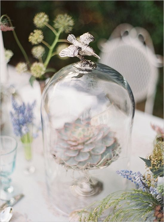 (via things i want for my house one day :) / succulent in a dome)