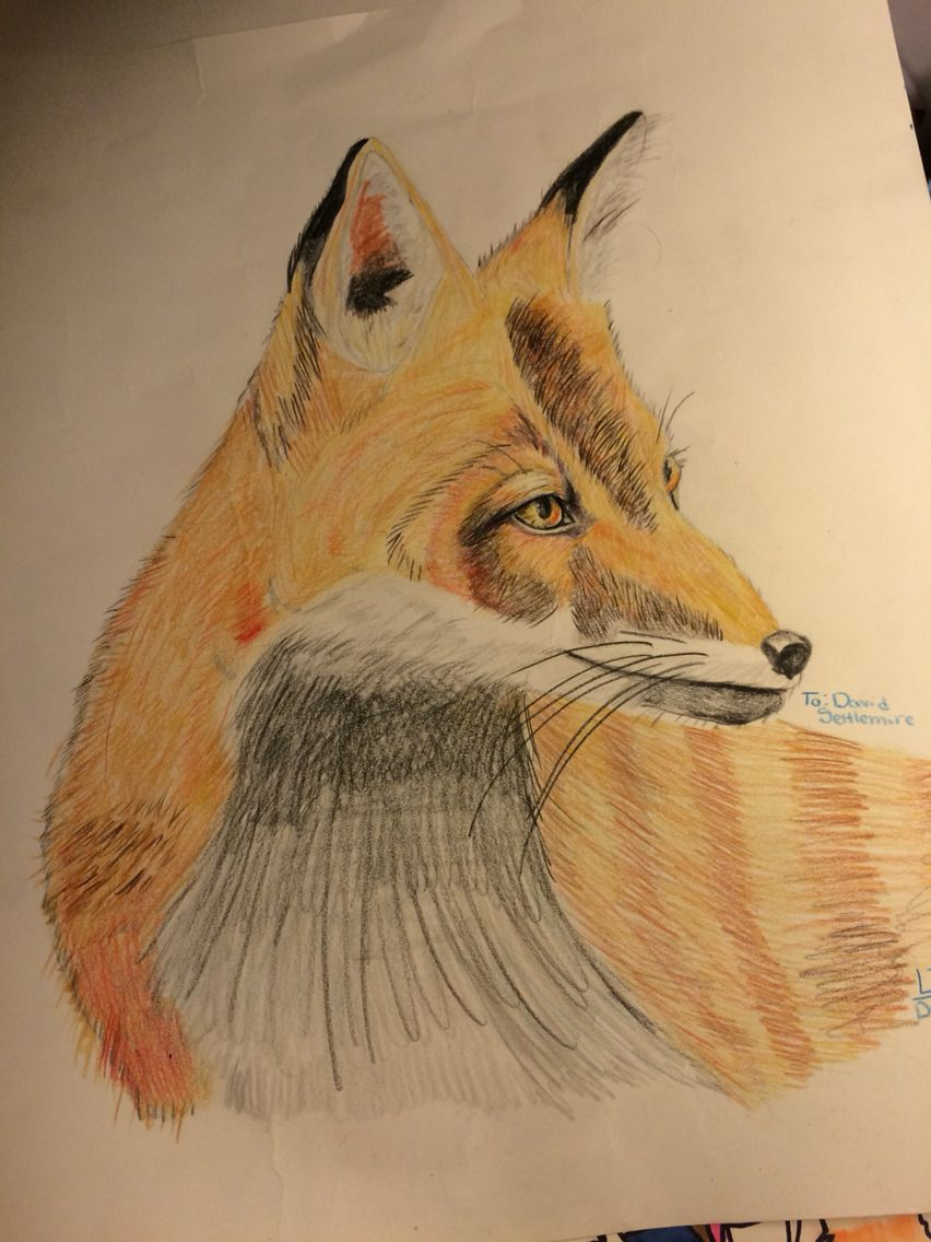 Colored pencil fox