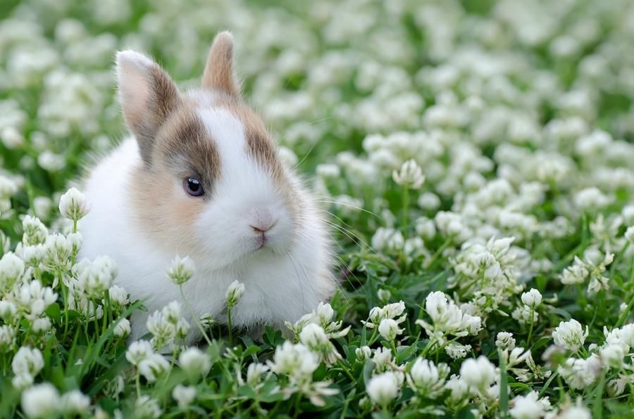 Rabbit........photo by Gabriele Vichi