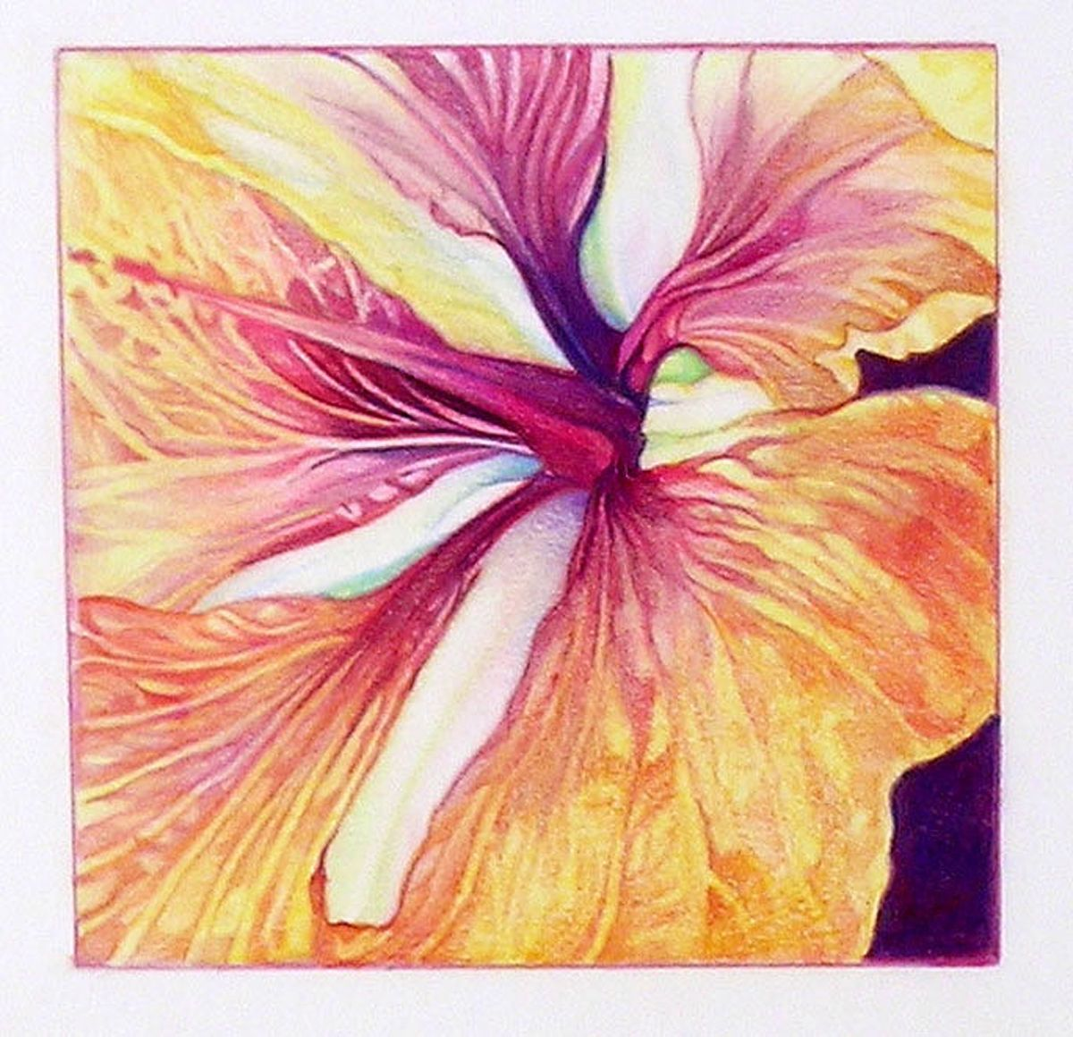 Art colored pencils - Hibiscus Colored Pencil Art