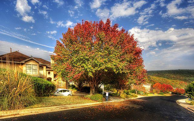 Tree turning to Fall!
