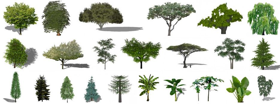 Sketchup Plants, Trees, and Shrubs Archive | trees | Trees to plant