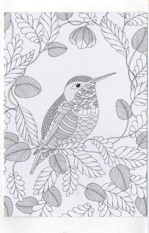 Millie Marotta S Colouring In Card House Sparrow Bird Coloring