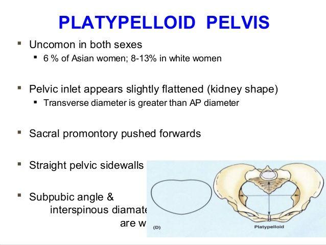 applied-anatomy-of-pelvis-and-fetal-skull-40-638.jpg (638×479 ...