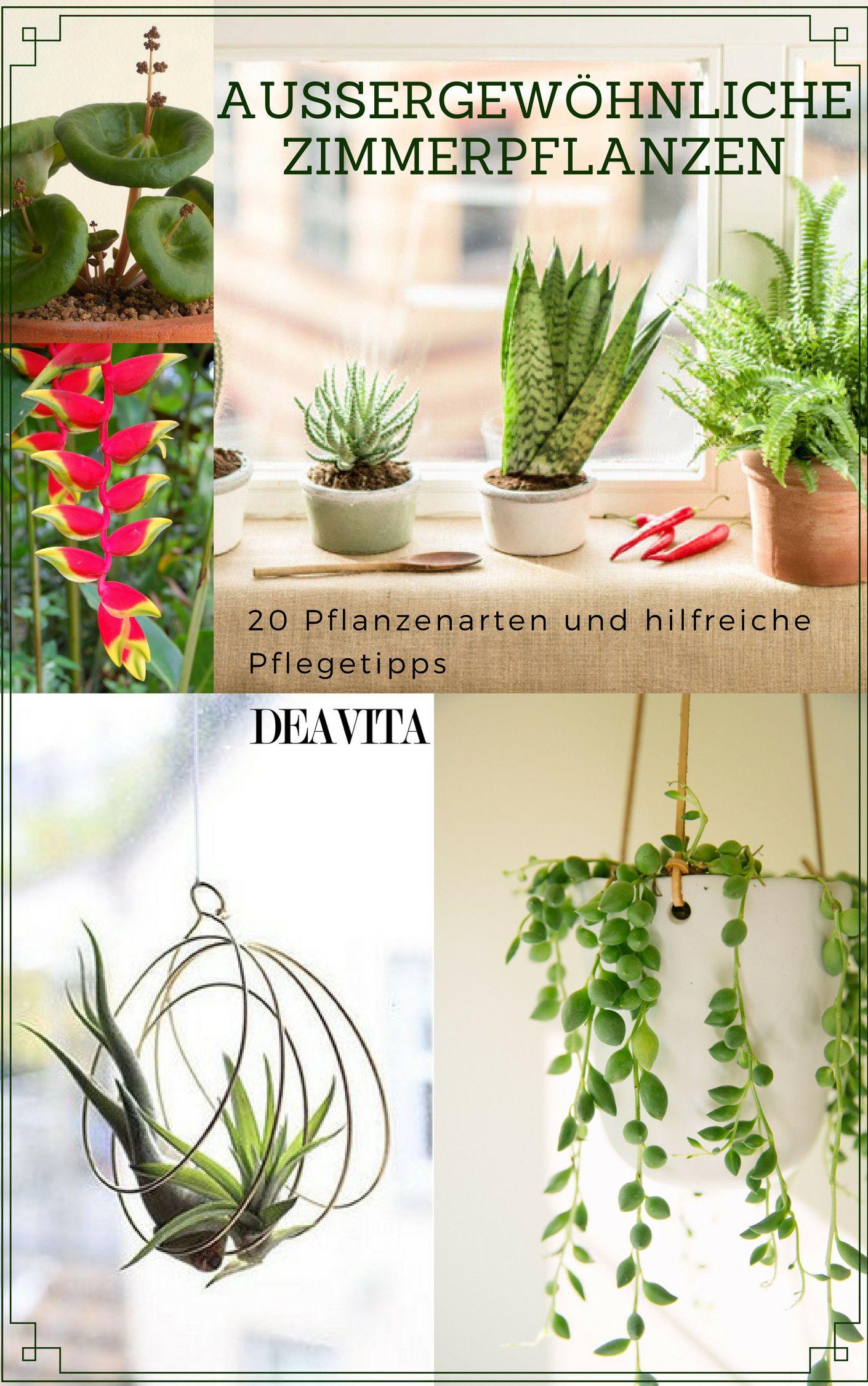 Innenfarben für haus pflan schaffen eine beruhigende frische atmosphäre ins haus und