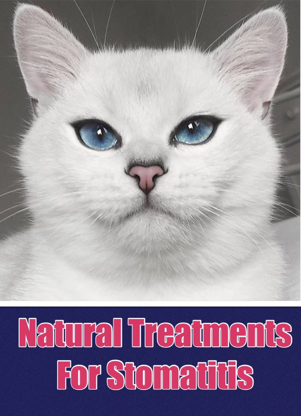 Natural Treatments for Feline Stomatitis Gum disease