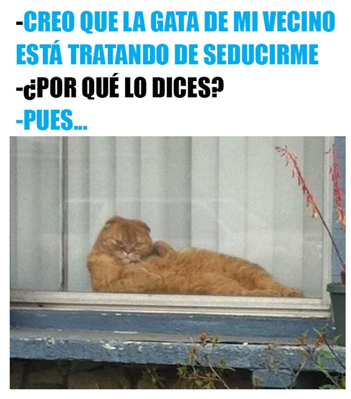Photo of 21 Memes de gatos que harán reír a los amantes de los perros