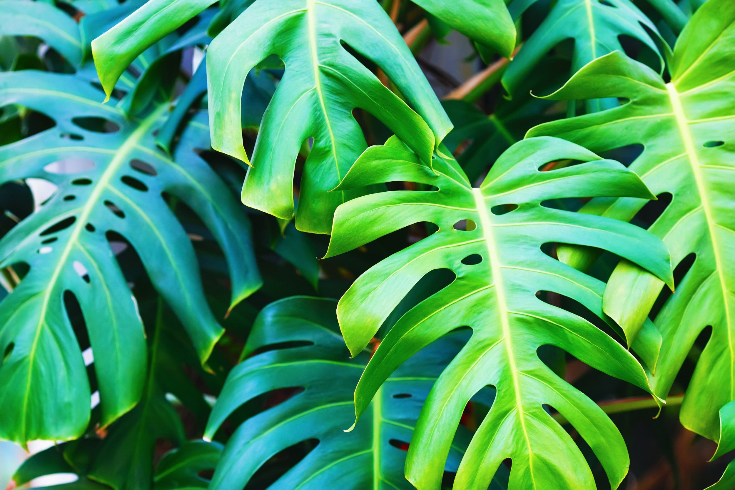 Your houseplants aren't actually improving the air quality