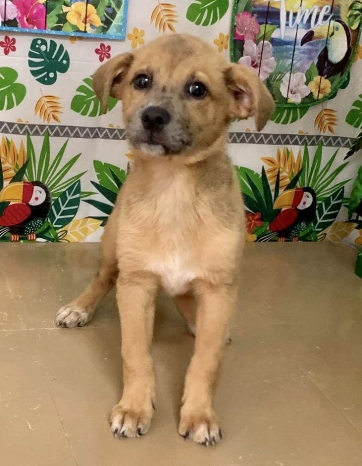 Golden Retriever Puppies For Adoption In Nj References