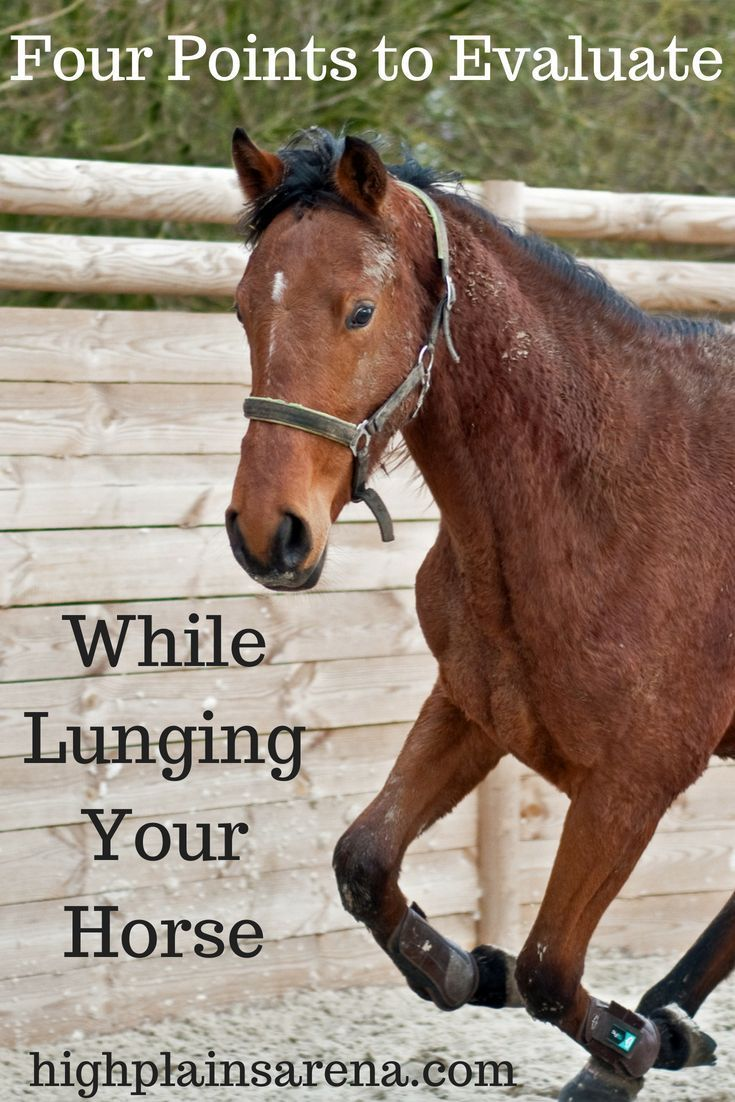 definition horseback trails gambling