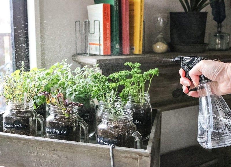 セリアのメイソンジャーでハーブ栽培 キッチンにオリジナルのハーブ