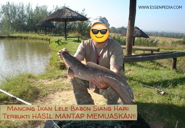 Umpan Ikan Lele Babon Siang Hari Yang Sudah Terbukti Mantap Dan Ampuh Dengan Menggunakan Umpan Alami Dari Hewan Hidup Atau Umpan Racikan Fish Barracuda Sports