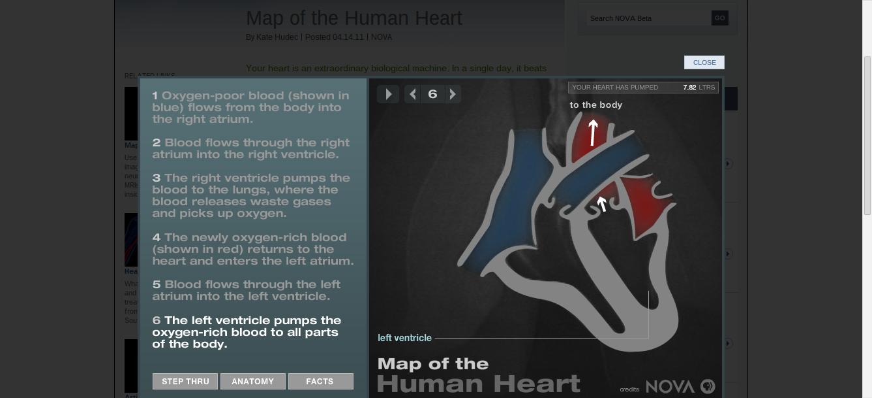 NOVA | Map of the Human Heart TERRIFIC interactive showing the ...