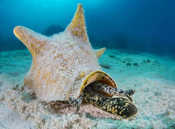 Under The Sea: The Weird And Wonderful Creatures From The