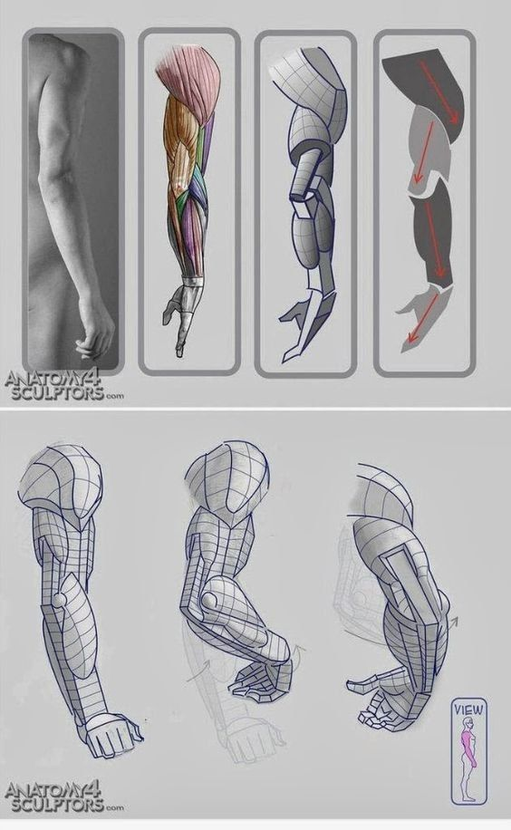 Croquois Pinterest Anatomy Drawings And Anatomy Reference