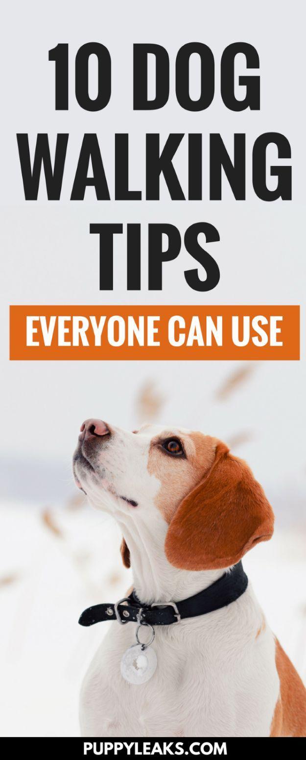 How to Make Walking the Dog Enjoyable foto