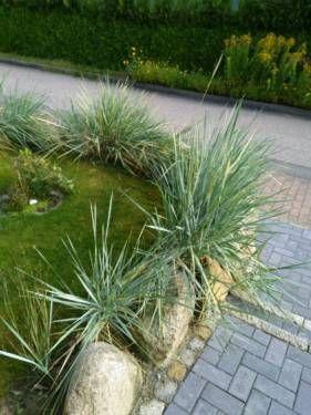Dünengras Zu Verschenken In Brügge Holst Garten Pinterest