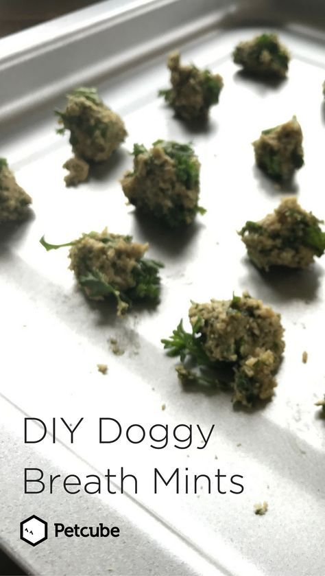 Diy Mint Dog Treats Freshen Your Dog S Breath With This