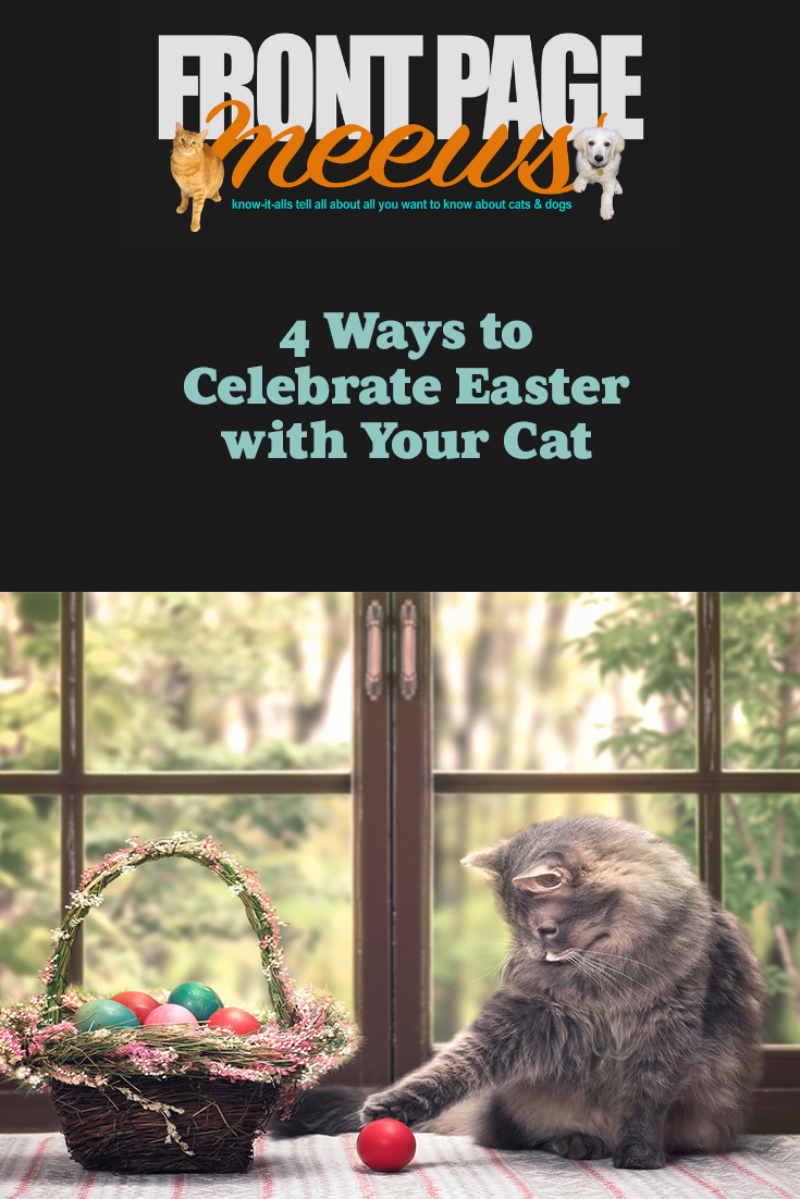 4 Ways to Celebrate Easter with Your Cat Cat safe, Pet