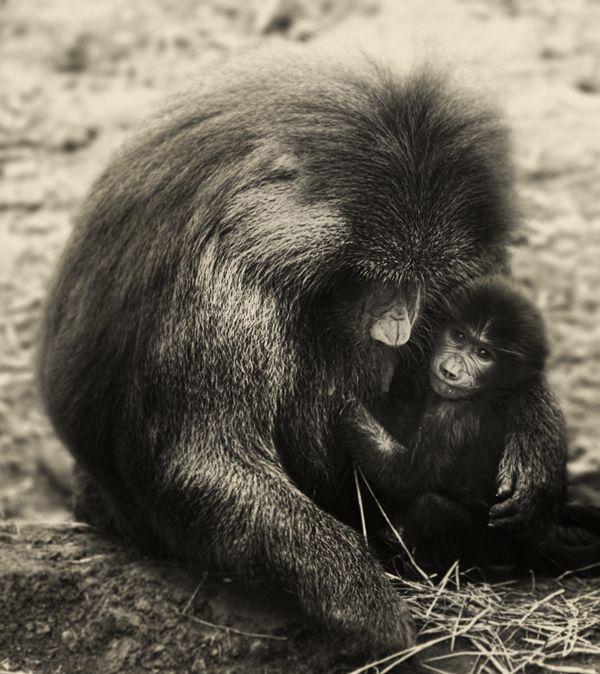 Monkeys ,story tellers by Marta Orlowska
