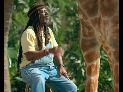 Will Giraffe Milk Become The Latest Fad Superfood? - Neatorama