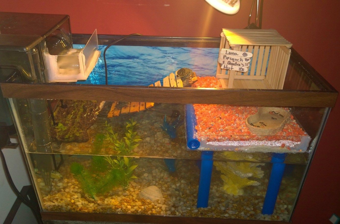 10 Gal Tank For Our 3 Mini Slider Turtles Tank Includes Water Heater And Filter With Diverted Waterfall To Back Wall Turtle Tank Pet Turtle Turtle Habitat