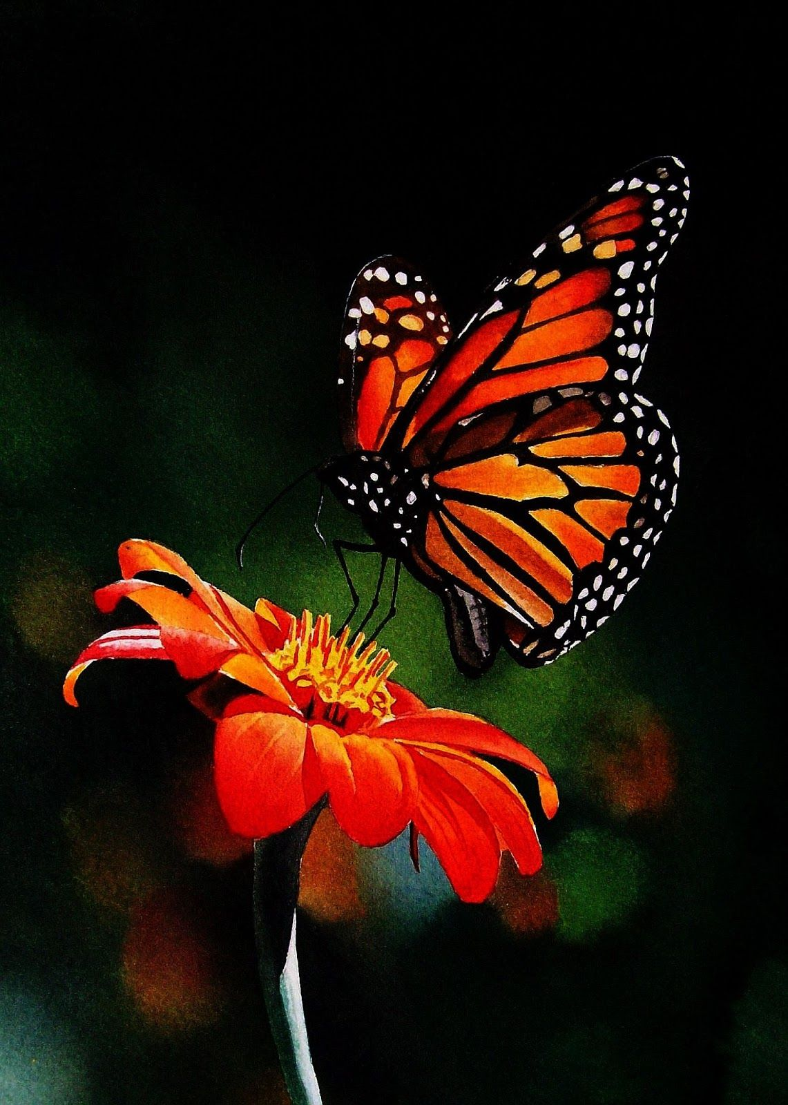 Monarch On Mexican Sunflower Video Butterfly Painting Monarch