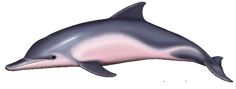 d6f6d7d5fe Tucuxi Tulum, Cancun, Puerto Morelos, Riviera Maya, Marine Life, Dolphins,