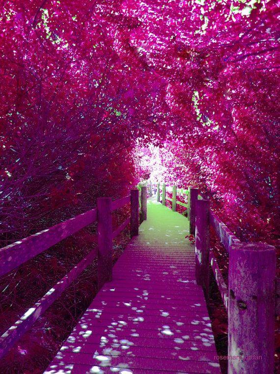 Secret Path garden nature purple plum green by RosemaryJordans, $20.00