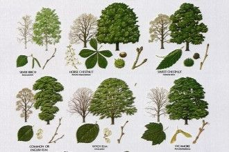 Tree Leaf Names 3 British Identification Keys In Plants Category