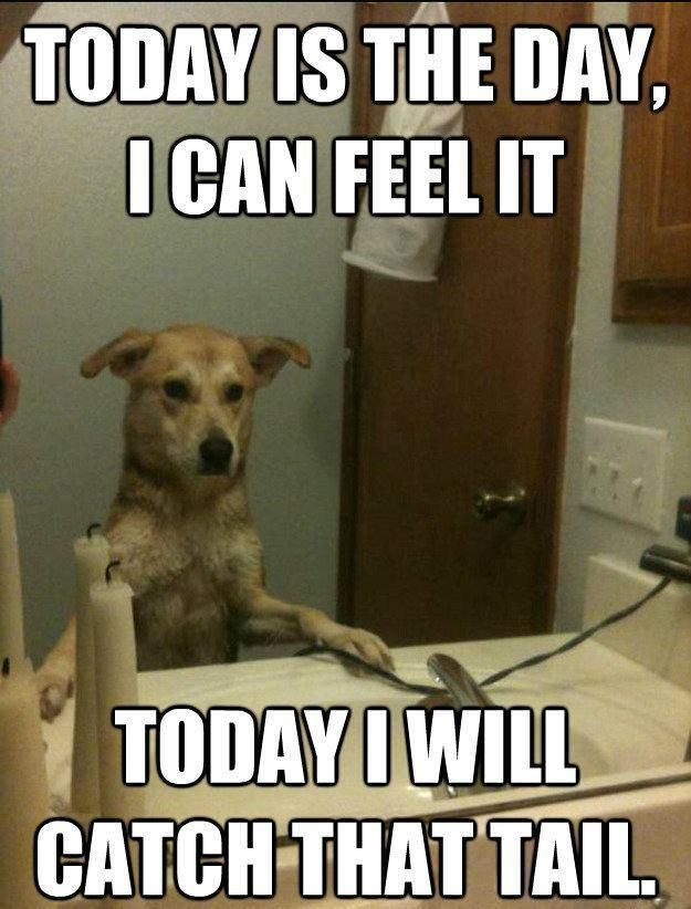 I Can Feel It Today I Will Catch That Tail Funny Animal Quotes