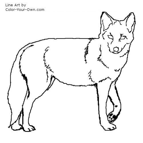 Coyote Line Art Animal Spirit Guide Coyote Wolf Drawing