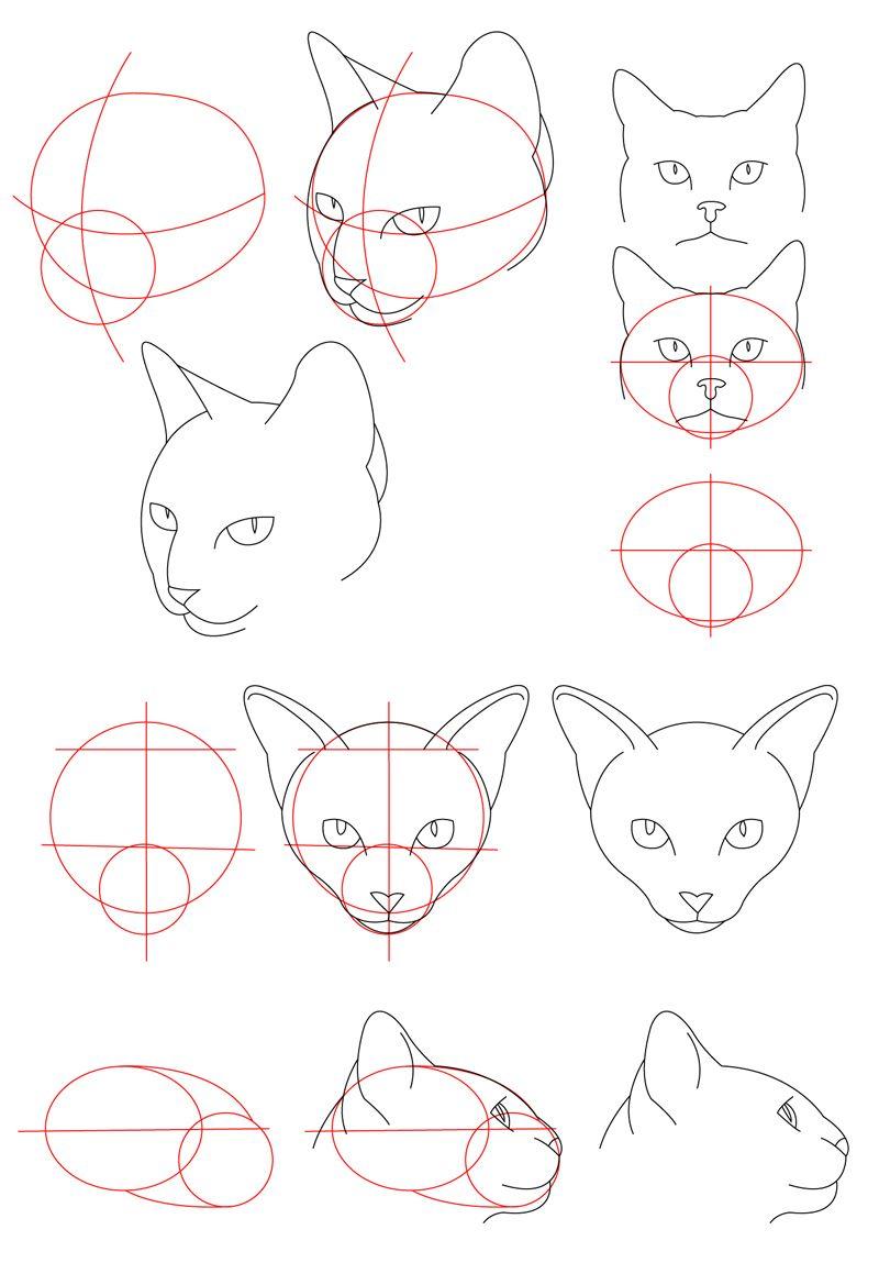 Cat Tutorial Head By Perianardocyl On Deviantart Cat Drawing Tutorial Cat Face Drawing Animal Drawings