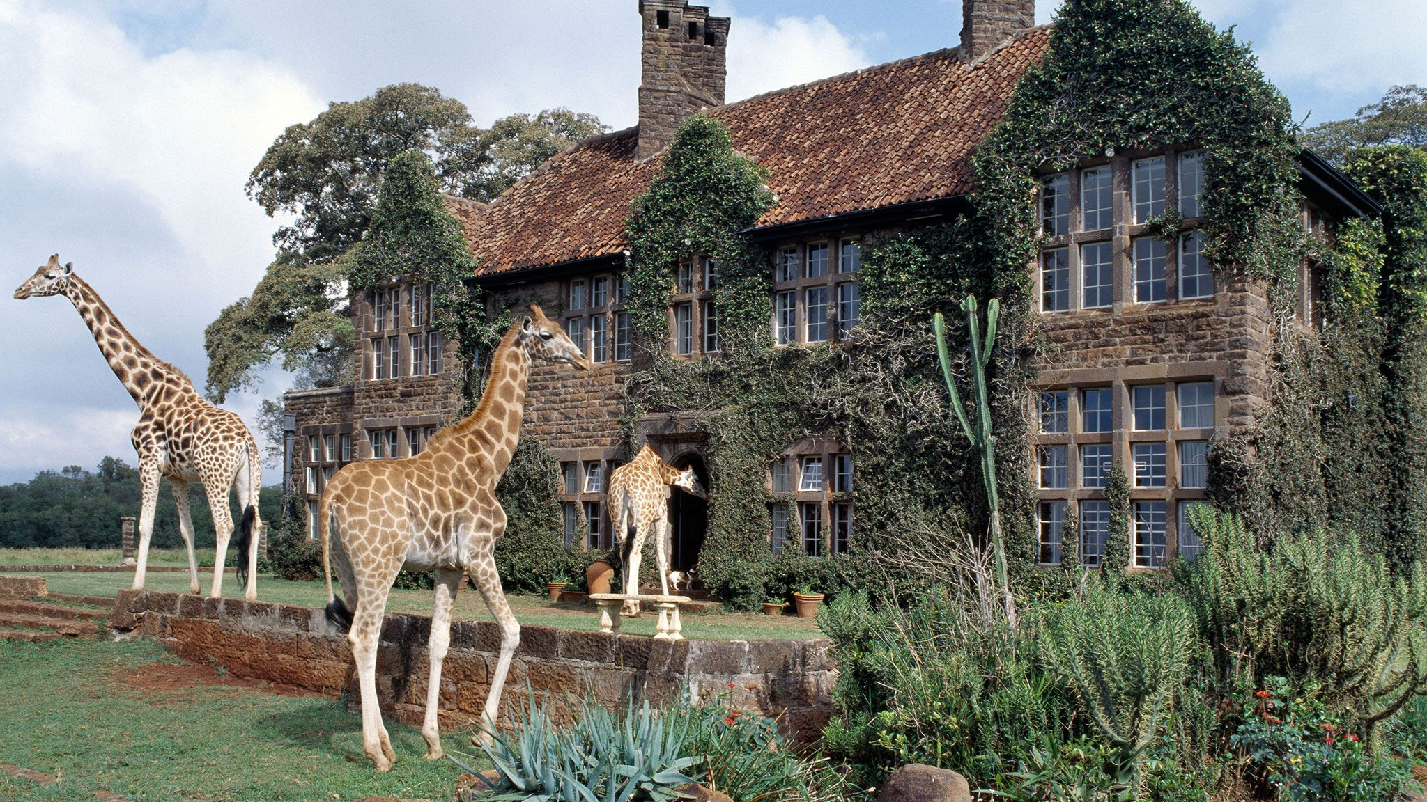 Condé Nast Traveler Gold List 2015: Top Hotels in the World   No matter how many safaris you've been on, there is nothing quite as wonderful and unforgettable as having breakfast or tea with giraffes at the Giraffe Manor, in Nairobi. A stunning turn-of-the-century stone mansion with ten rooms, it is also home to half a dozen friendly giraffes that poke their long necks into the large windows as guests are having breakfast and join them in the front garden for late-afternoon tea.
