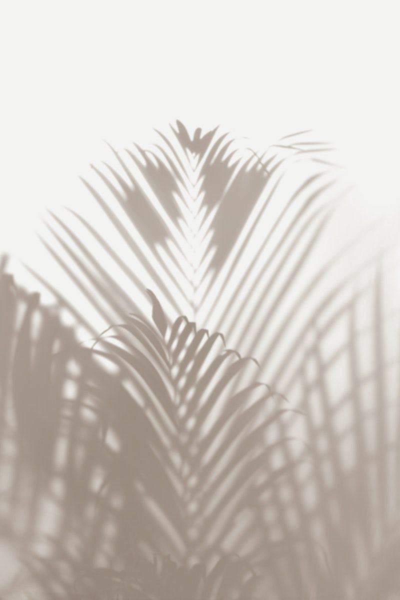 Blurred Green Palm Leaves On Off White Background Free Image By Rawpixel Com Teddy Rawpixe Iphone Background Wallpaper White Aesthetic Aesthetic Wallpapers