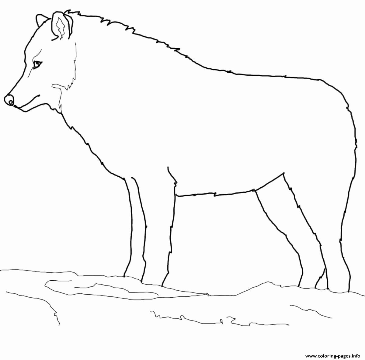 Arctic Wolf Coloring Pages Best Of Arctic Wolf Coloring Pages Printable In 2020 Arctic Wolf Artic Wolf Coloring Pages