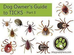 How To Get Rid Of Ticks In Your Yard | Ticks, Diy dog bed ...