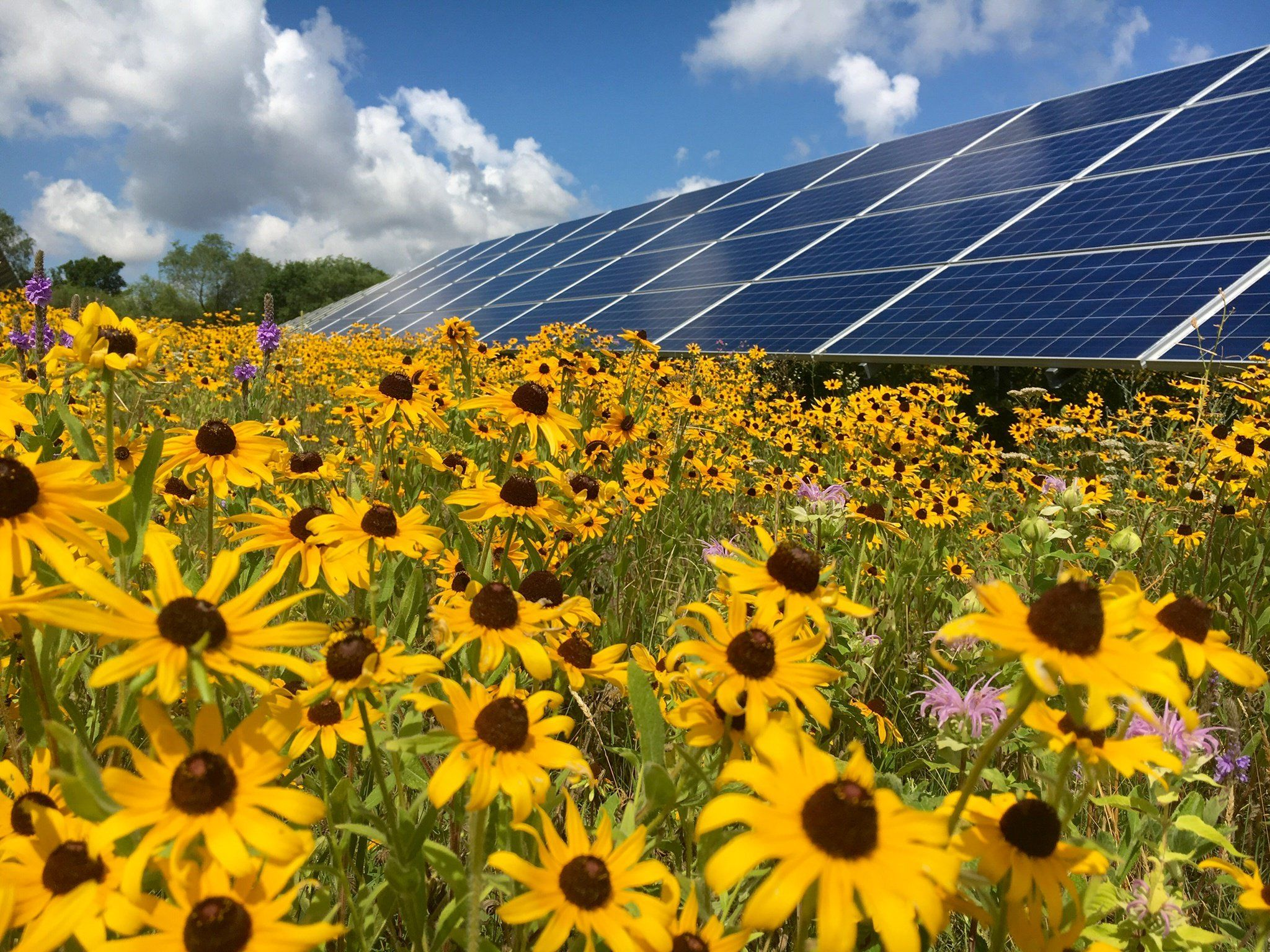Utility Industry News Voices And Jobs For Energy Industry Professionals Optimized For Your Mobile Phone Solar Solar Farm Solar Panels